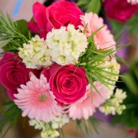 Hot pink roses, light pink gerber daisies, stock