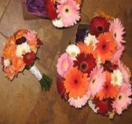 [Image: All large and mini gerbera daisies.]