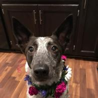 Piper's flower collar
