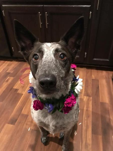 [Image: How fun, we designed this for a couple for their engagement pictures and now will be doing their wedding flowers. Happy Piper!]